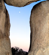 Fertile Moon, Joshua Tree